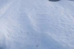 SNOW-5TH-TEE